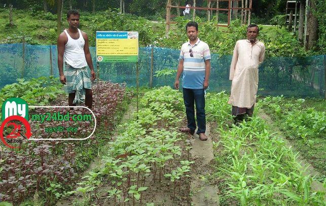 হোসেনপুর পুষ্টি বাগান, মাই ২৪ বিডি.কম